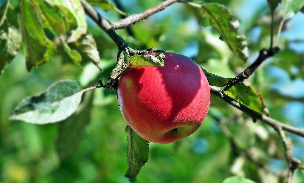 fruit-3086464_1280